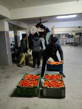 IT Employees unloading the Tomato load 2